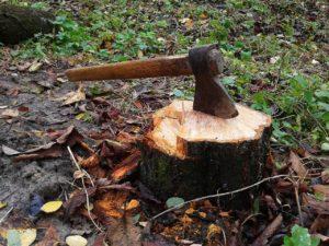 Под Астраханью осудили двух «черных лесорубов»