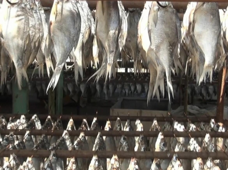 В Астраханской области подделывали рыбу, икру и краба импортного производителя