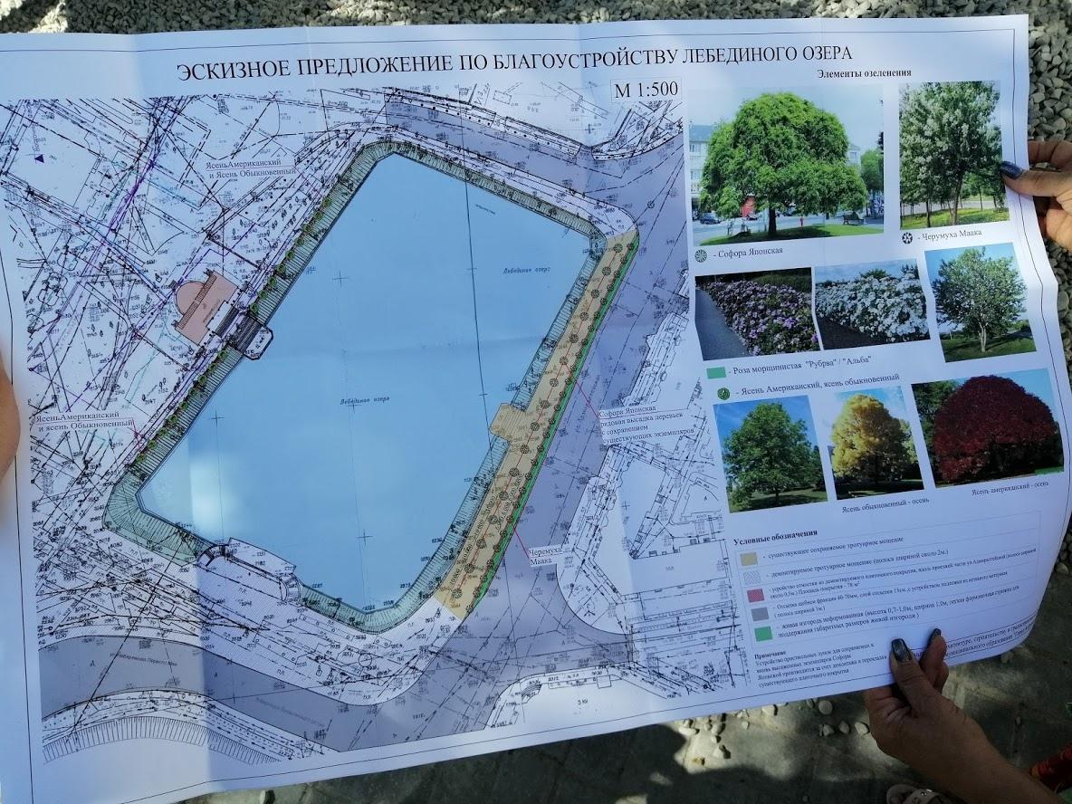 Вокруг Лебединого озера собираются высадить новые деревья