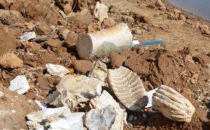 В Астраханской области обнаружили останки мамонта