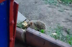 Животные пришли одобрить поправки про их защиту к зданию астраханского избиркома
