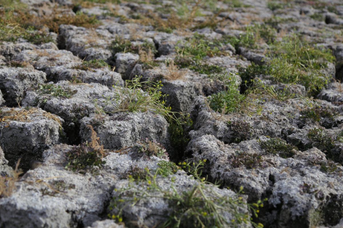Сельские территории Астраханской области продолжают деградировать