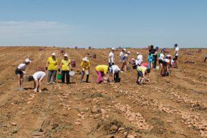 Темпы развития сельского хозяйства Астраханской области опережают общероссийские