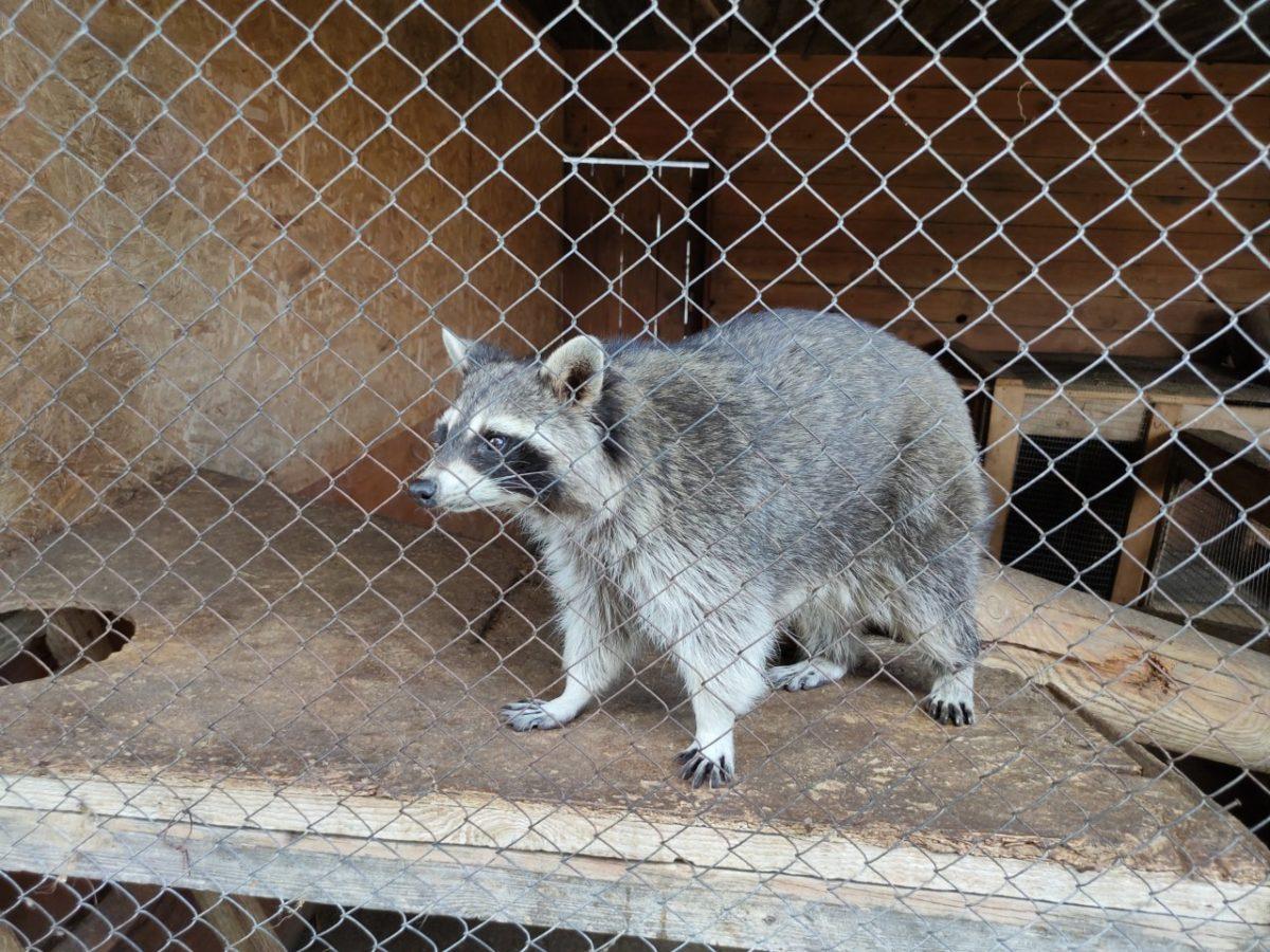 Как поживают обитатели зоопарка «Баба Фрося»