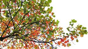 Астраханская область сможет выращивать собственный миндаль
