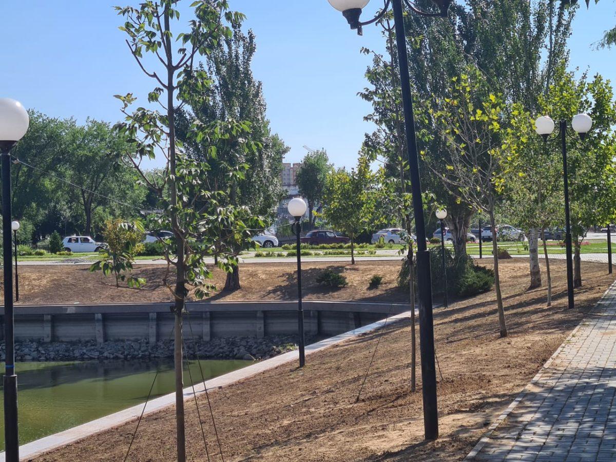 На Лебедином озере сажают новые деревья вместо старых тополей