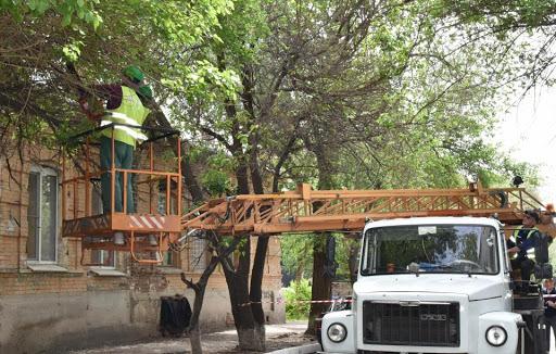 Депутаты «Справедливой России» отстояли права жителей на опиловку деревьев