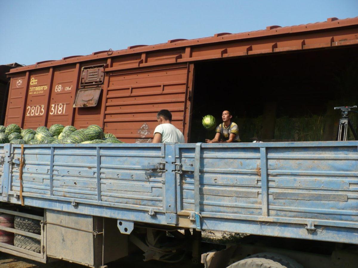 Первые вагоны с картофелем и арбузами отправились со станций Астраханского региона ПривЖД