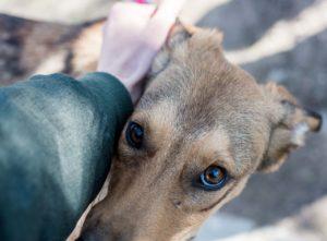 Астраханские депутаты предложат наказывать нерадивых владельцев домашних животных
