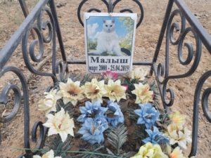 В Астрахани несколько лет действует неофициальное кладбище домашних животных