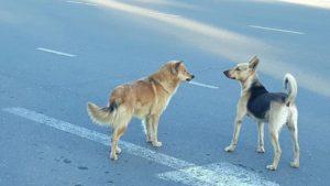 На окраине Астрахани собаки отбирают хлеб у прохожих
