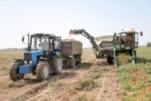 Астраханский завод томатной пасты начнет выращивать зерновые культуры