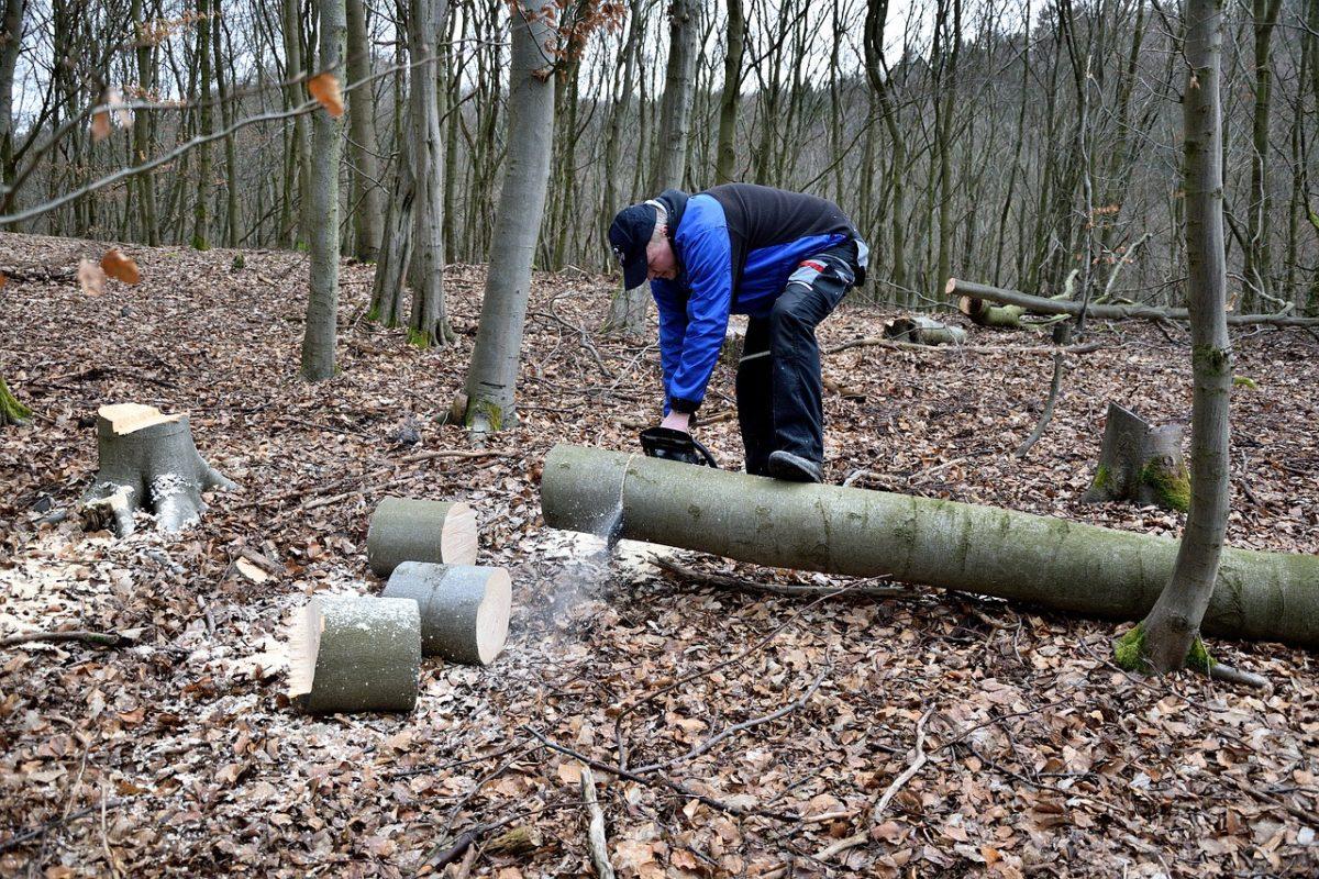 За вырубку астраханского леса мужчина заплатит почти 700 тысяч рублей