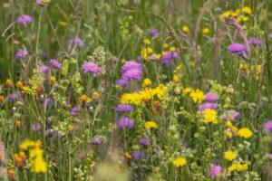 Астраханская область может увеличить площадь выращивания люцерны почти на 40%