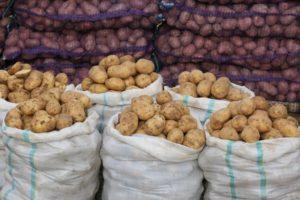 В Астраханской области резко подорожала картошка