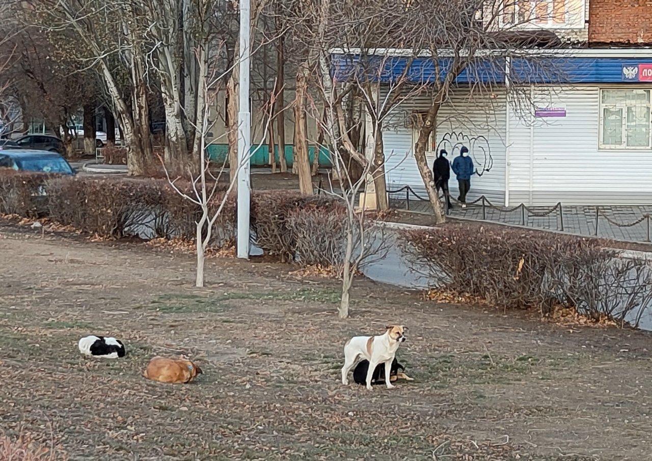 Собаки отобрали у астраханки масло и колбасу