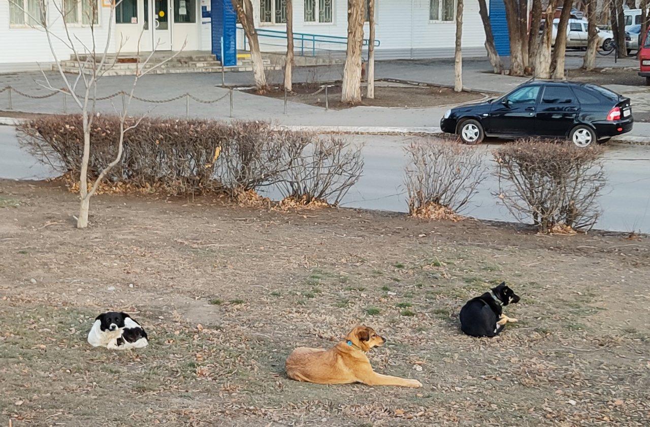 Прохожие спасли ребенка от стаи собак в Астрахани
