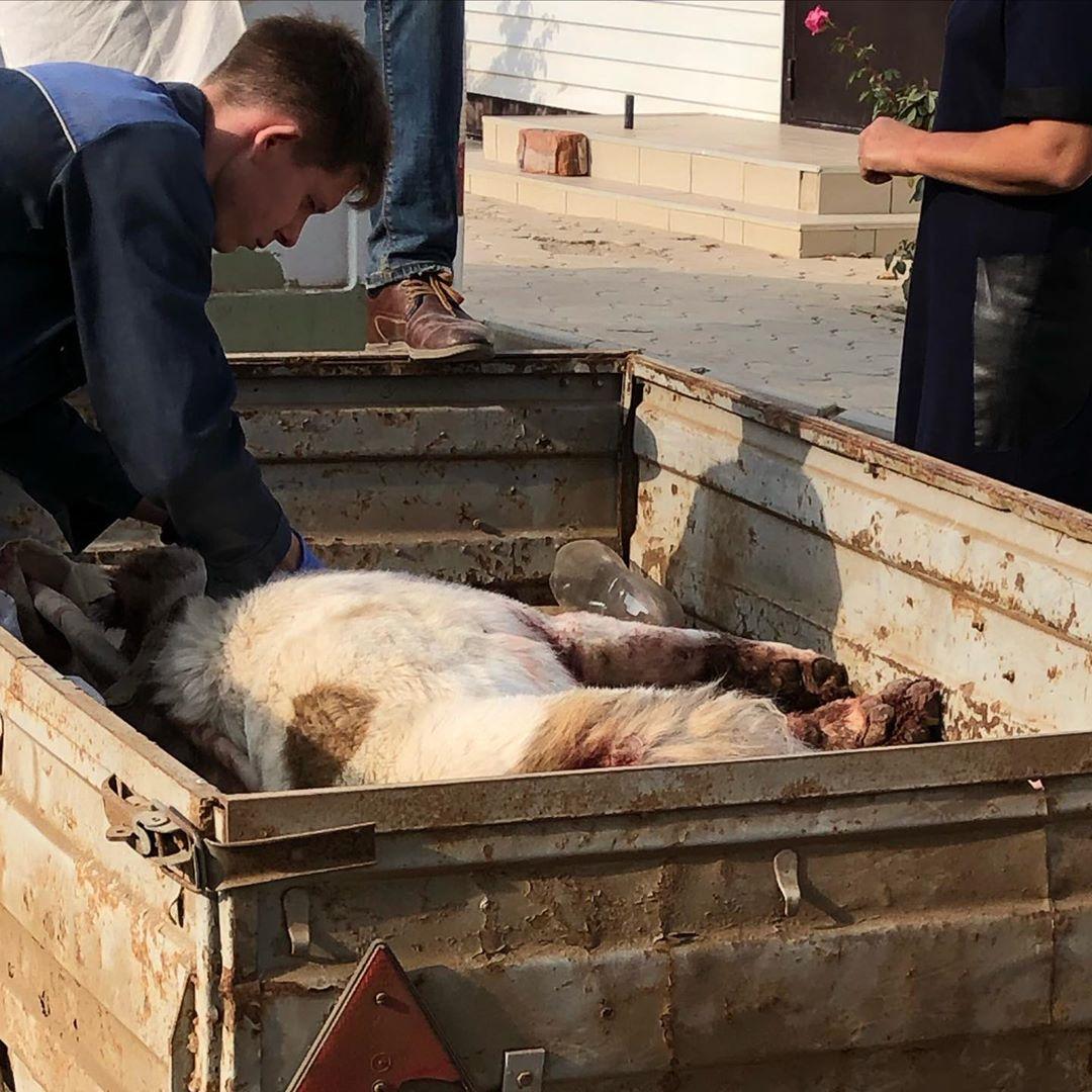 Астраханский полицейский застрелил агрессивную собаку