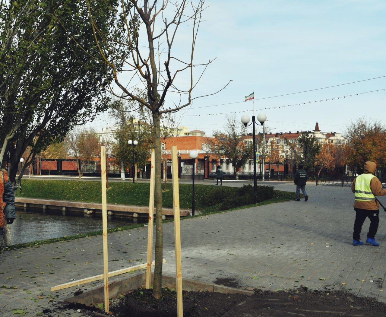 Вокруг Лебединого озера высадили крупные саженцы деревьев