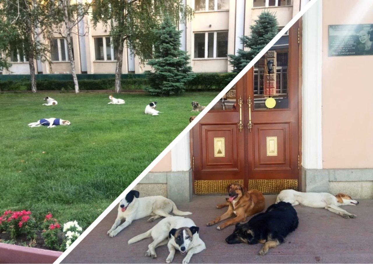 Одну и ту же стаю собак полгода фотографируют в центре Астрахани
