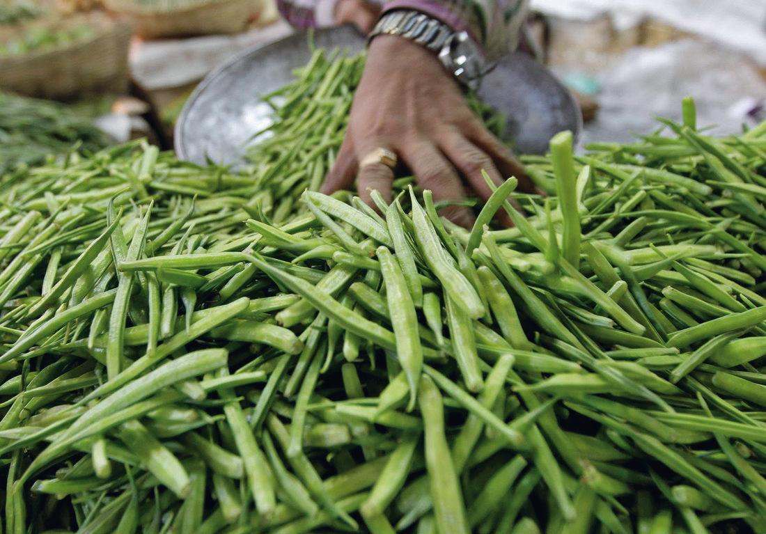 В Астраханской области хотят выращивать природный загуститель для продуктов питания