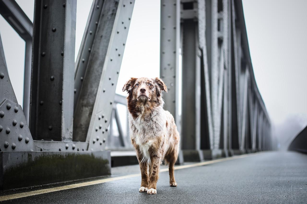 Игорь Бабушкин: любая тема в моем инстаграме заканчивается мостами и собаками