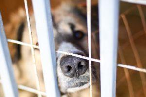 Астраханские учителя просят убрать собак с территории школы