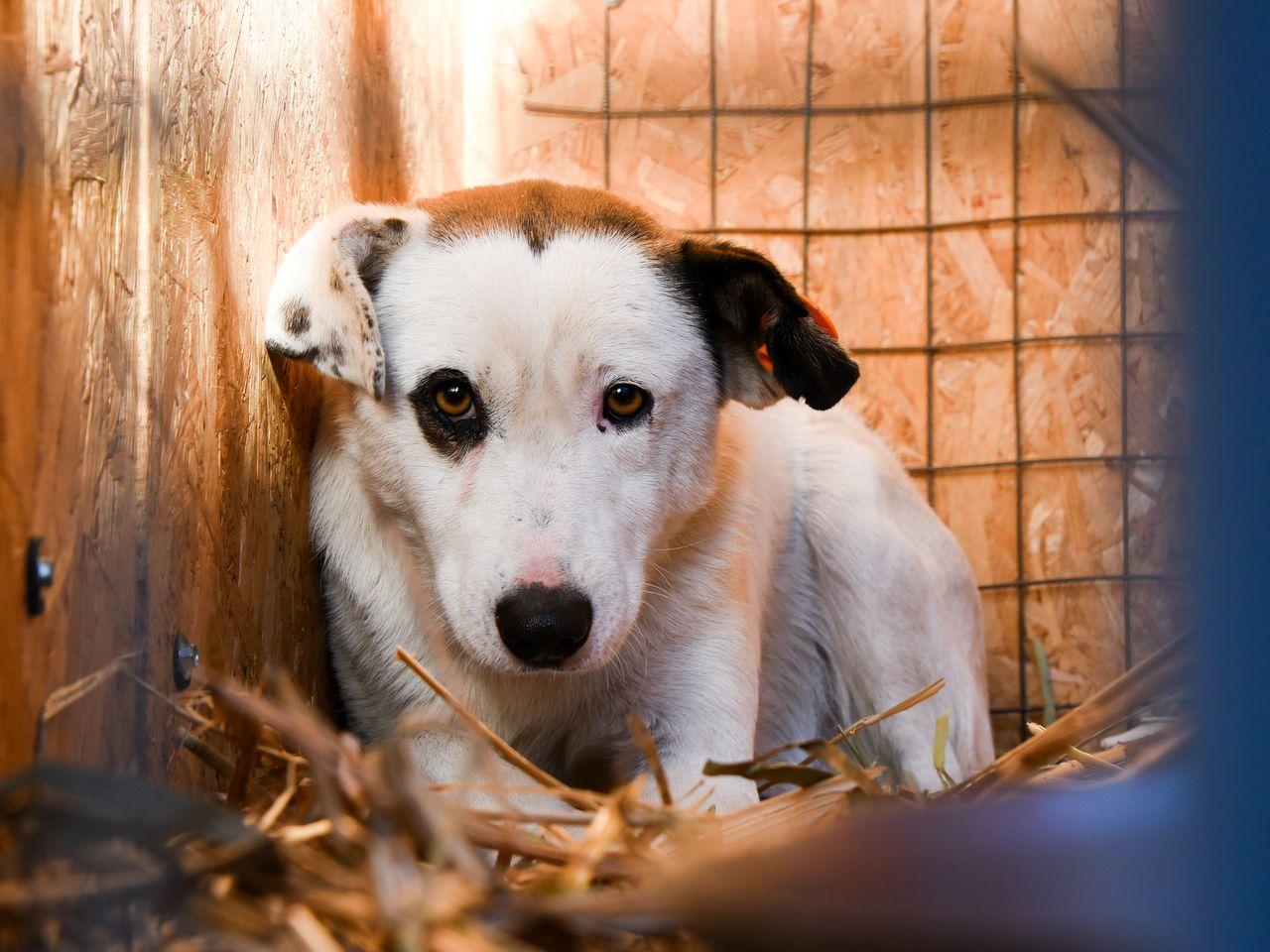 В Астрахани отловили почти две тысячи собак