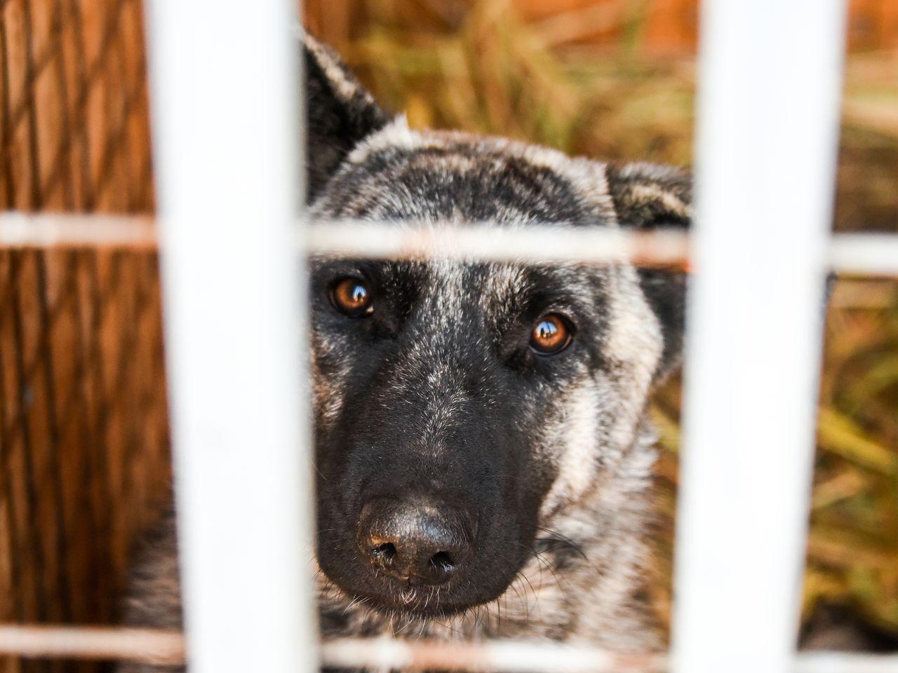 Приют для животных в Астрахани может появиться на базе Каспийской флотилии