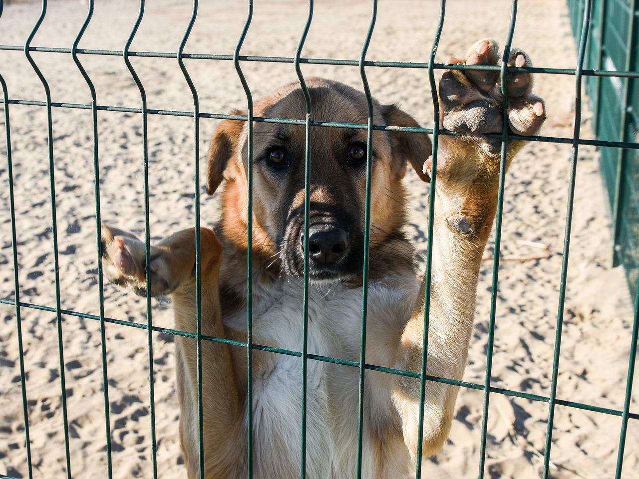 Олег Шеин: в Астрахани прекратили отлов собак