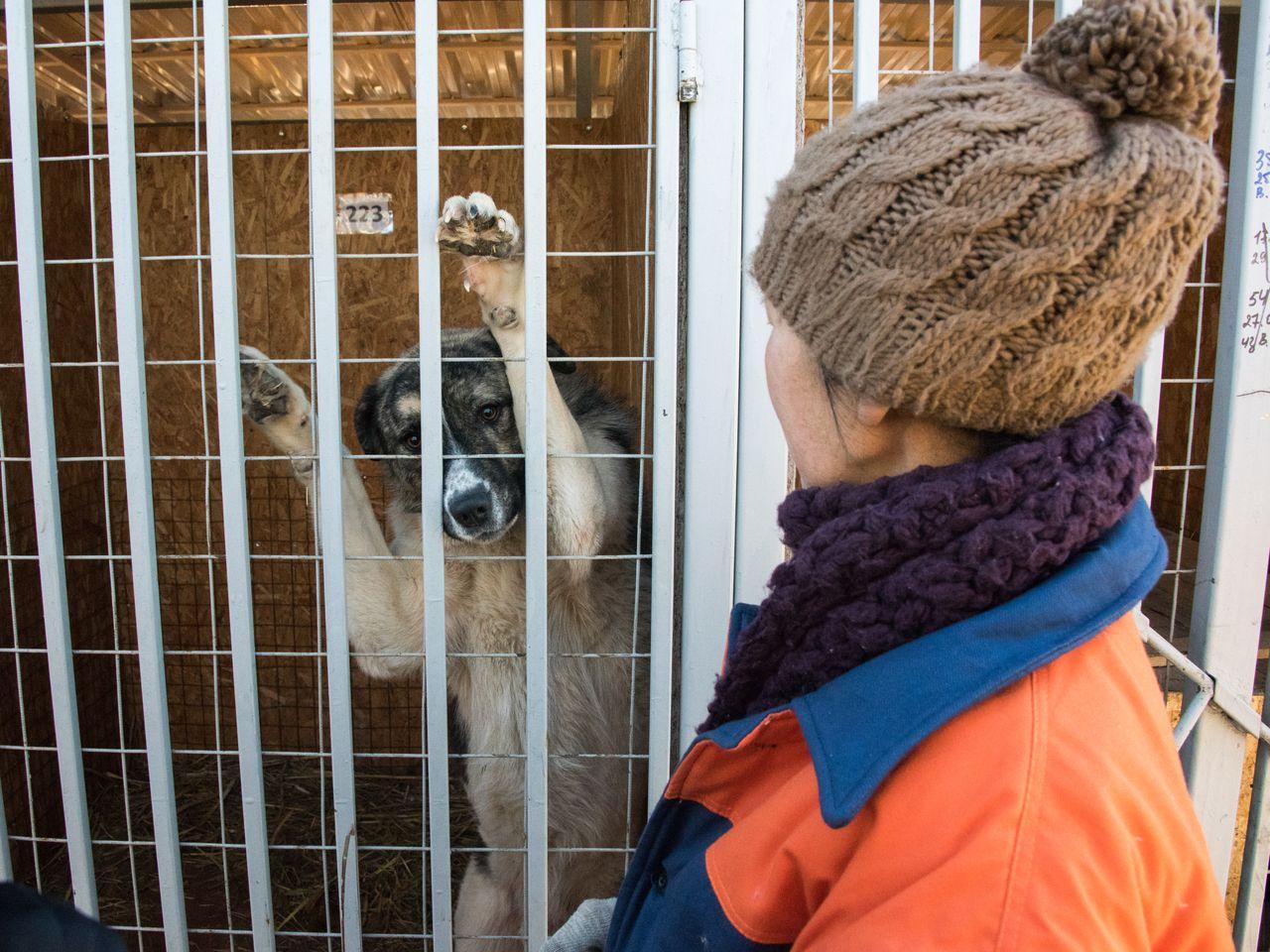 Предпринимателю не заплатили за отлов собак в Астрахани