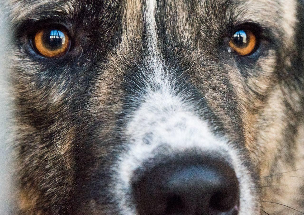 Дело по махинациям со стерилизованными собаками в Астрахани ушло в суд