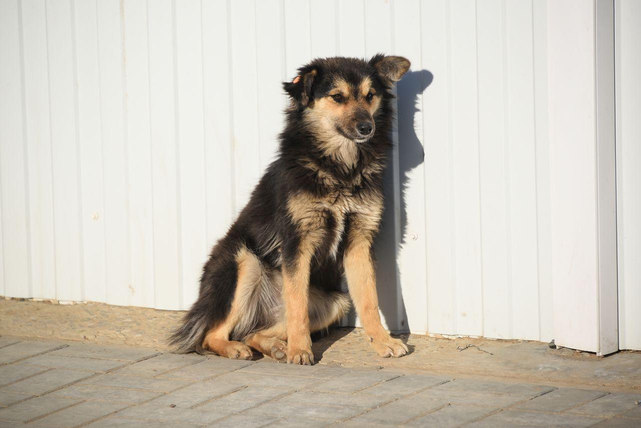 Астраханская ветслужба будет бесплатно стерилизовать бродячих собак