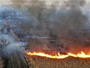 В Астраханском заповеднике загорелось 800 квадратных метров камыша