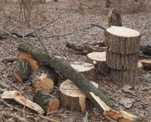 Администрация Астрахани объяснила вырубку деревьев на Городском острове