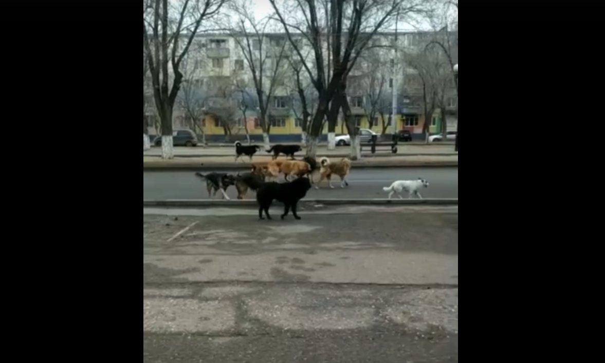 Бродячие собаки «перекрыли» улицу Савушкина