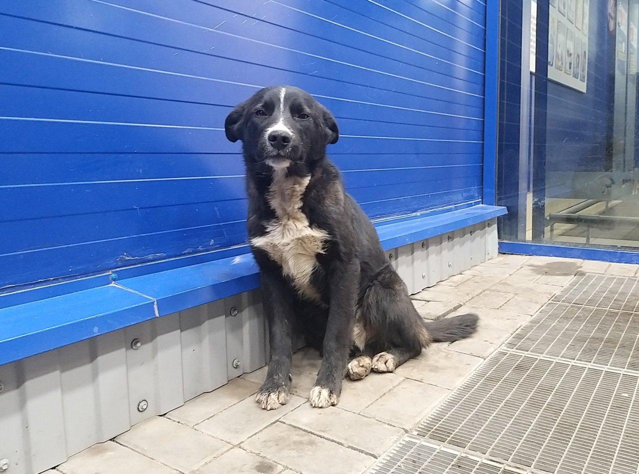 Игорь Бабушкин признал, что приюты не спасают от бродячих собак