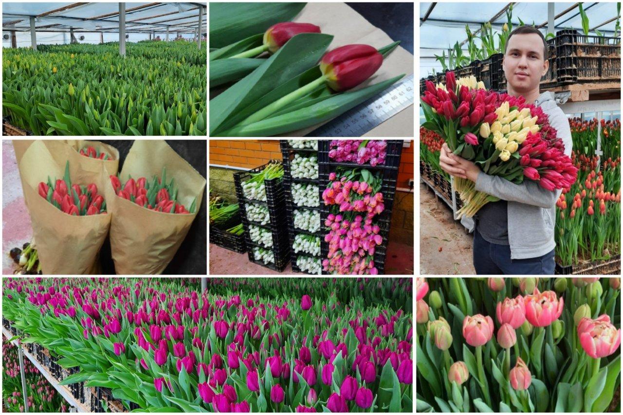 Тюльпановая лихорадка по-астрахански: Максим Варычев рассказал о тонкостях цветочного бизнеса