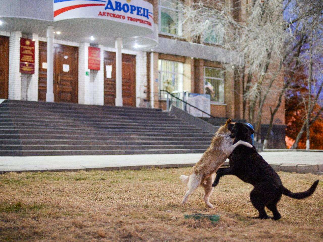 В нашествии собак обвинили экс-чиновника администрации Астрахани