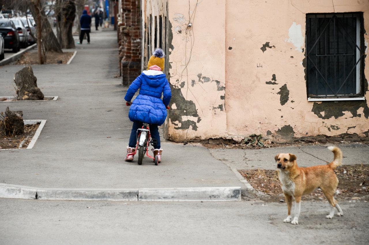 Бродячие собаки снова напали на детей в Астрахани