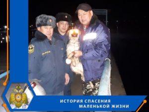 В Астраханской области спасли щенка из ледяного плена