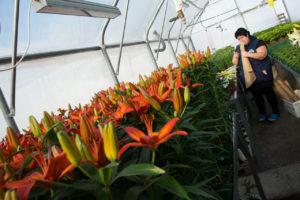 Вальс цветов: как под Астраханью выращивают полный спектр растений и мини лес