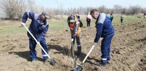 Железнодорожники высадили в Астрахани три тысячи деревьев