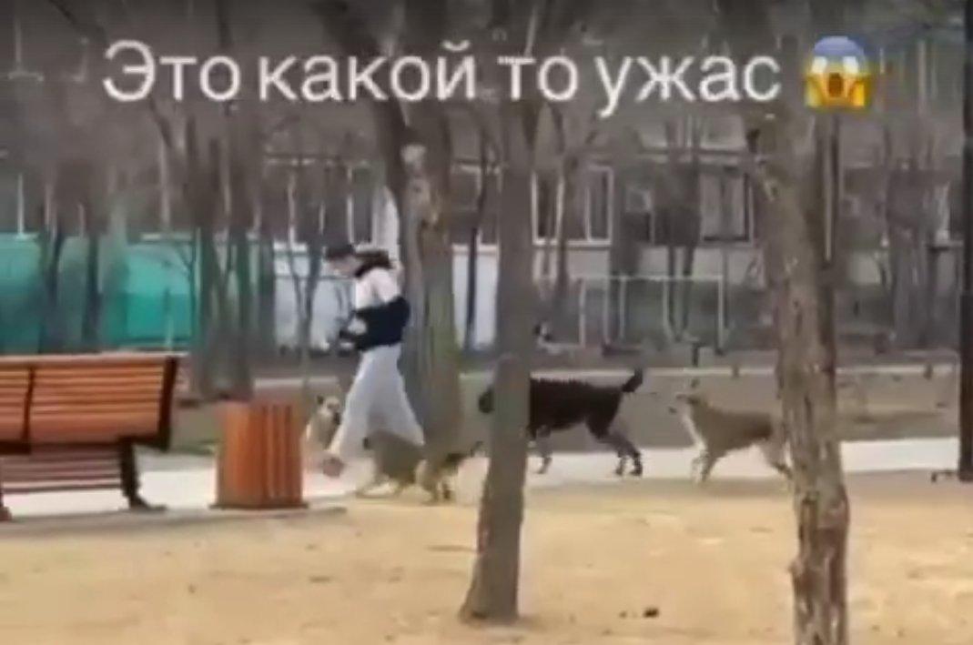Стая собак на улице Татищева терроризирует астраханцев