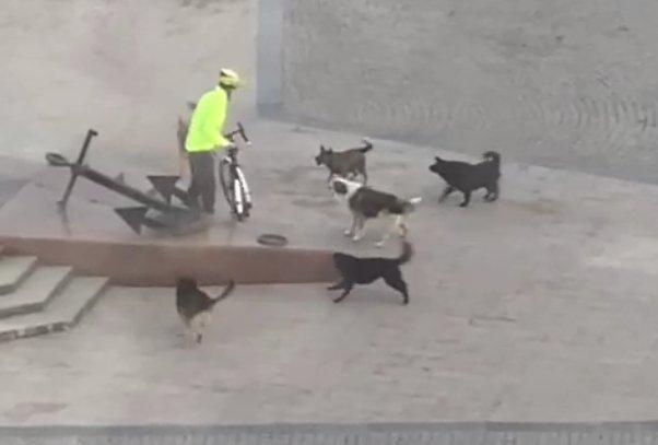 Собаки атаковали велосипедиста на Петровской набережной