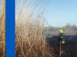 В садовом товариществе под Астраханью снова горит камыш