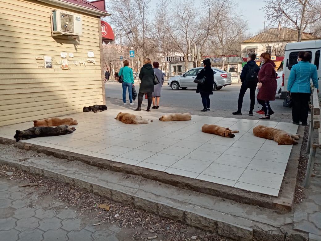 Стая собак оккупировала остановку на заводе Ленина