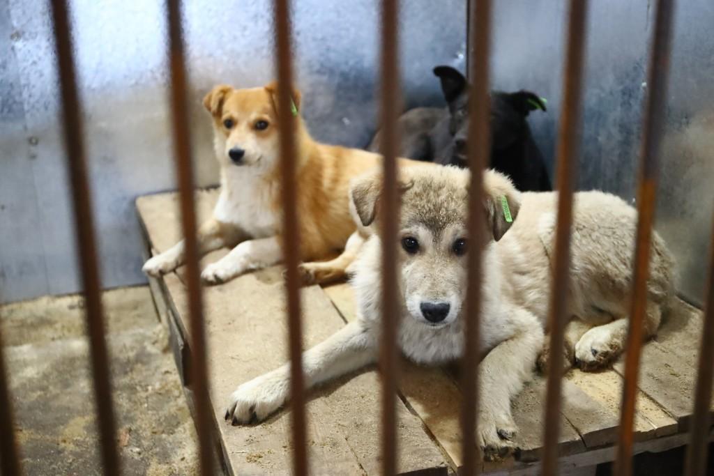 Частные инвесторы открыли в Астраханской области приют для собак
