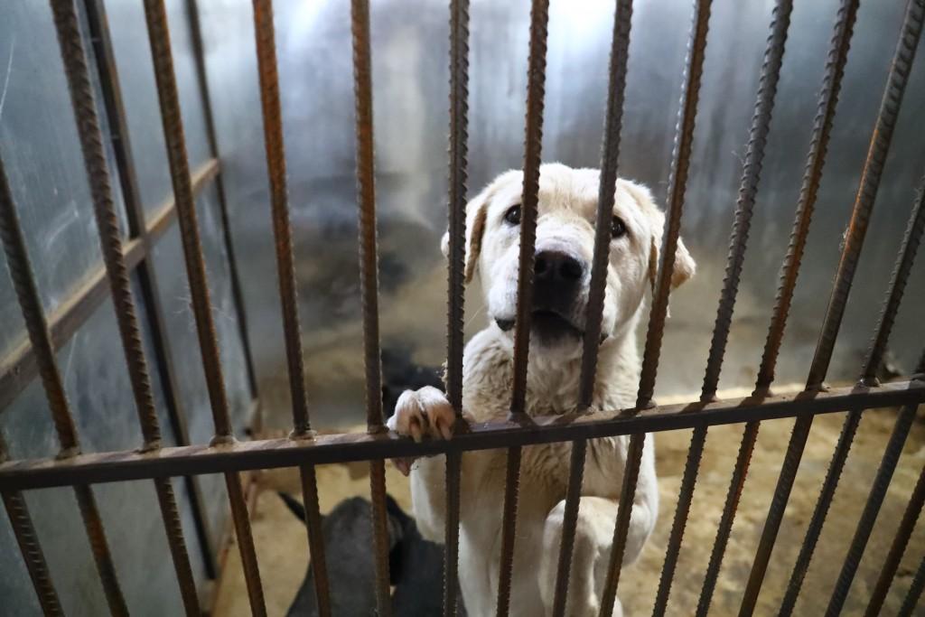 Жители Астрахани не дают отлавливать бродячих собак
