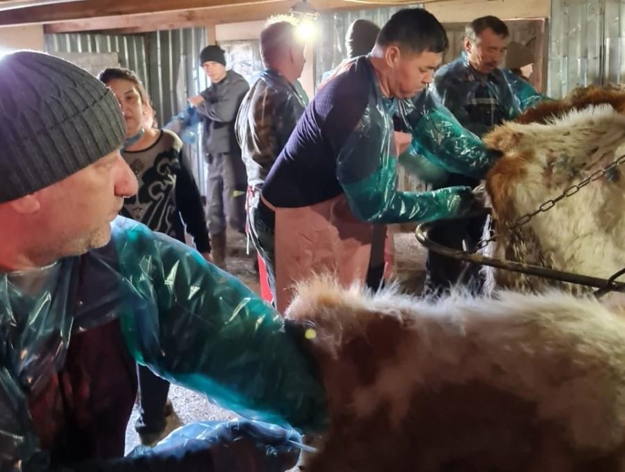 Воронежские осеменители скота поделились опытом с астраханцами